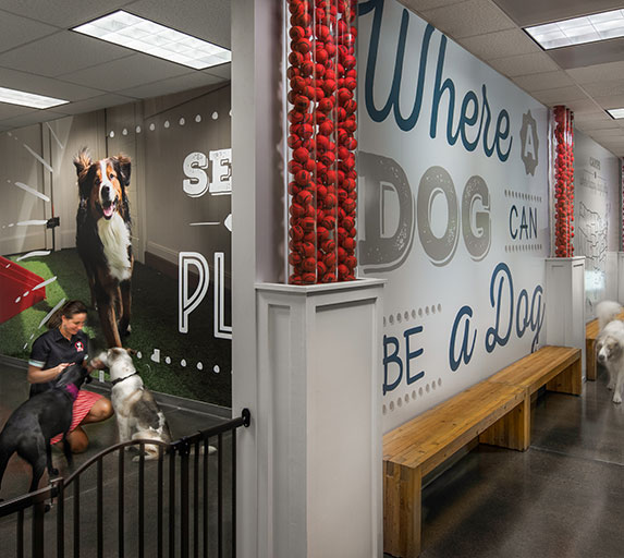 Camp Bow Wow, an Elsy Studios commercial interior design project in Denver, Colorado